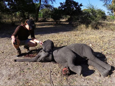 baby-elephant-snare-injury-malawi