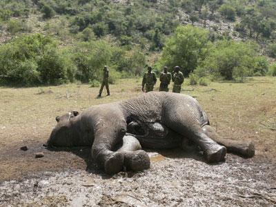 elephant-dead-kenya