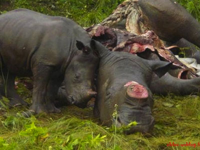 rhino-mother-baby-poaching